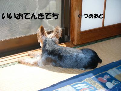 DSCF0163_convert_20090404201027.jpg
