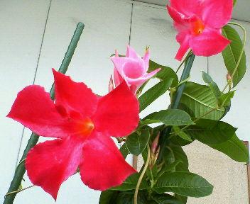 綺麗な鮮やかな赤い花・・