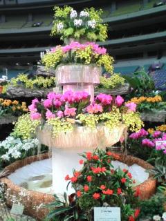 色とりどりの綺麗な花♪