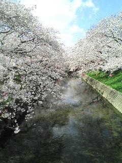 gojyoukawa3.jpg