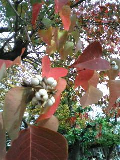 桜並木の紅葉・・