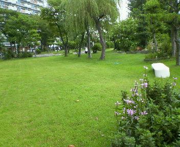 広い敷地があるので緑もいっぱい!
