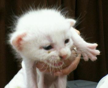 産毛のまだふわふわな子猫