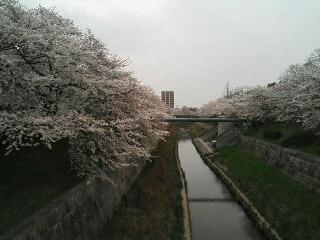 yamasaki2.jpg