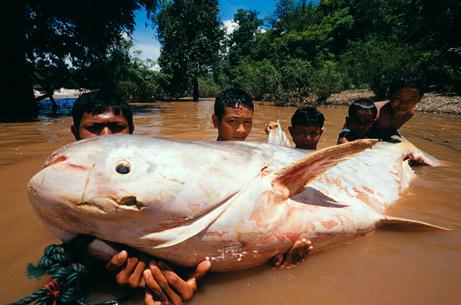 でっかい魚2