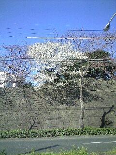 sakurakana
