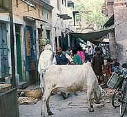 india01v.jpg