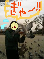 hato-14258.jpg