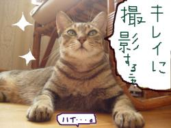 tibi-125987.jpg