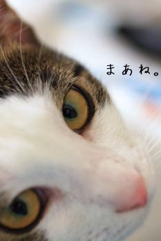 IMG_8907.jpg