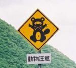 tanuki-hyousiki.jpg