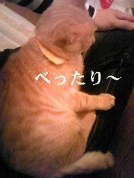 20081103230124