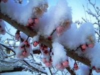 梅に春の淡雪H210327