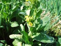菜の花H210406