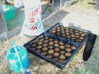 スイートコーン種蒔きH210502