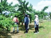 果樹園結果確認H210601