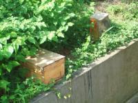 未だ入居ハチはいないH210617