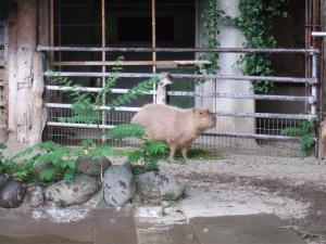 yozero_20090524_016.jpg
