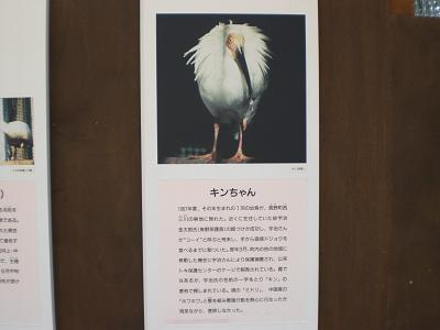 CIMG0673キン