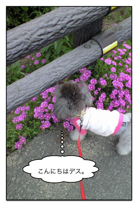 sanpo_1.jpg