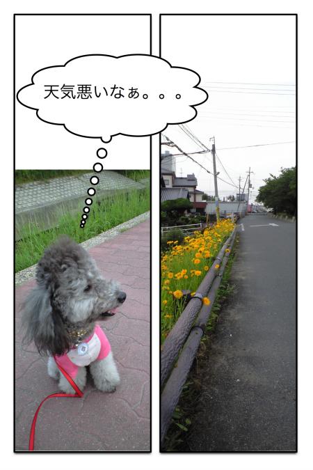 sanpo_4.jpg