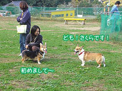 20071104_1.jpg