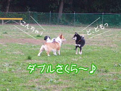 20071104_2.jpg