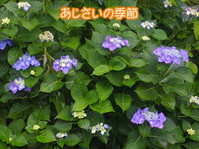 P1040593.jpg