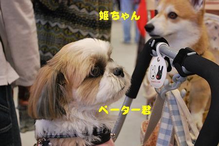 姫ちゃんペーター