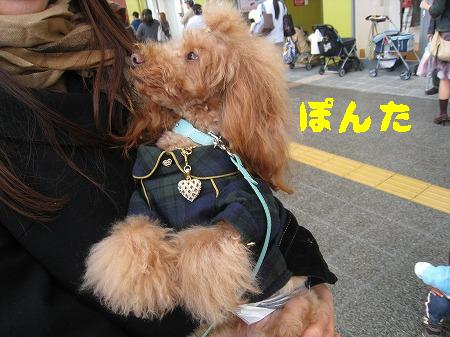 IMG_4221ぽんた