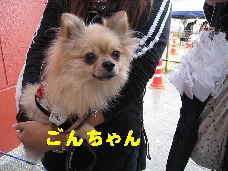 IMG_4242ごんちゃん
