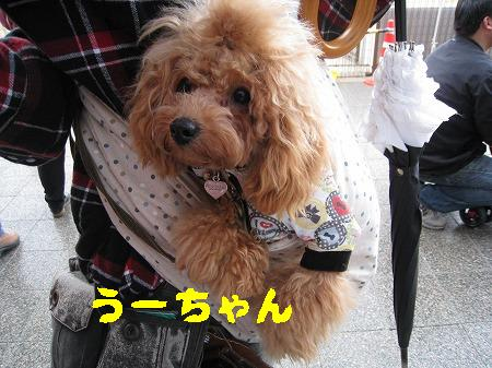 IMG_4244うーちゃん