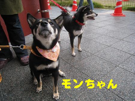 IMG_4255モンちゃん