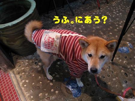 IMG_4194うふ