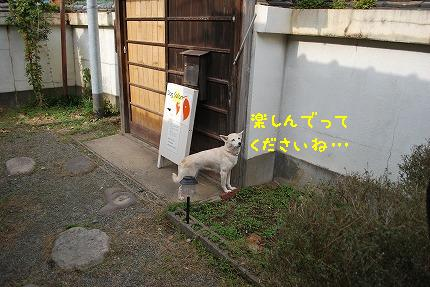 DSC_0056-2.jpg