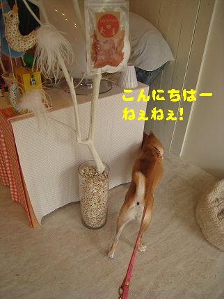 IMG_4443-2.jpg