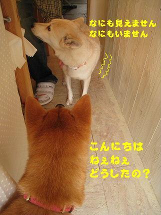 IMG_4450-2.jpg