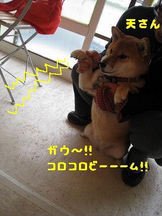 IMG_4459-3.jpg
