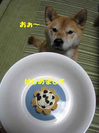 IMG_4676-2.jpg
