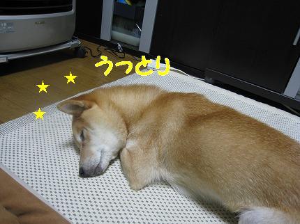 IMG_4817-2.jpg