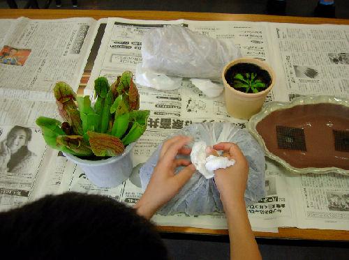 食虫植物1