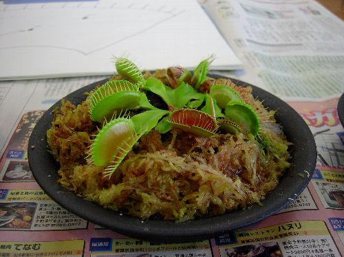 食虫植物3