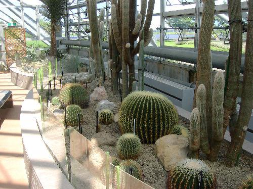 食虫植物4