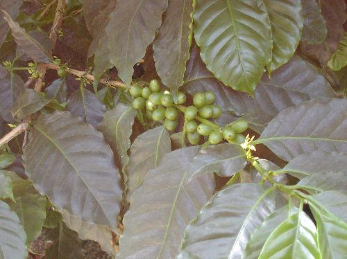 食虫植物7