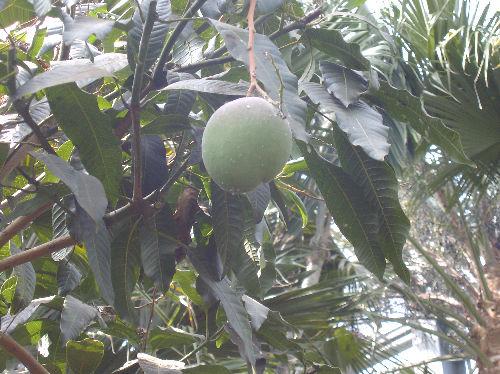 食虫植物8