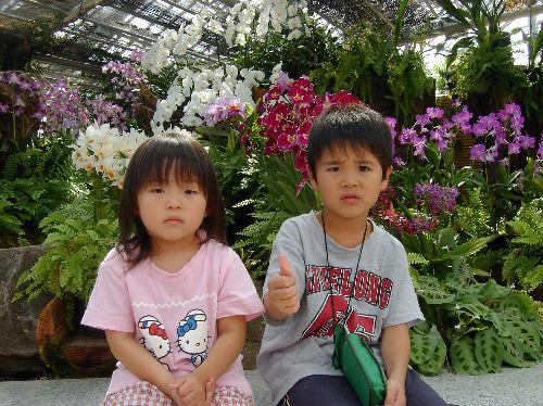 食虫植物10