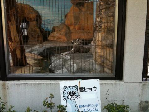 realSnow Leopard1
