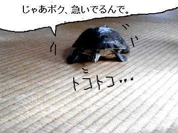 kamesaru.jpg