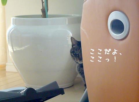 隠れてるミュウちゃん