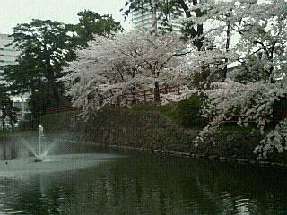 小倉・噴水と桜